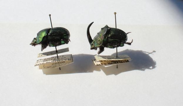 Escarabajos4.jpg