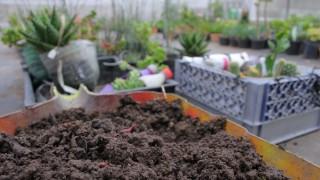 Vuélvete autosustentable y cultiva tus propios vegetales
