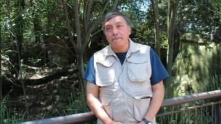 Más de dos décadas al cuidado del lobo mexicano en Chapultepec