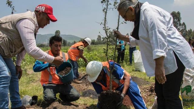 Restauramos el Parque el Zapote 🌳 (video)