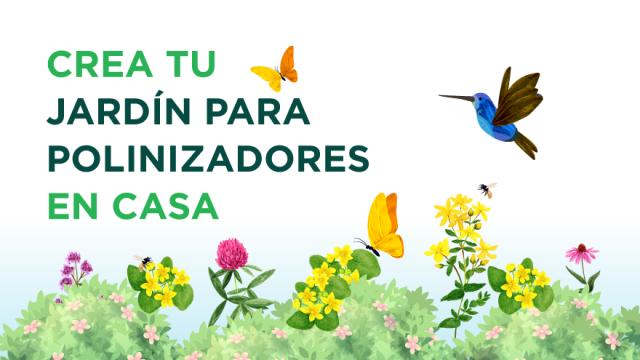 ¿Te gustaría tener un jardín lleno de mariposas? 🌷
