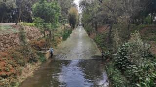Contribuye Sedema con restauración ecológica en Canal Nacional