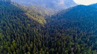 Convocan Sedema, ONU y UNAM a concurso sobre Suelo de Conservación