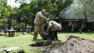 Informa Sedema sobre restitución de arbolado en Parque Winston Churchill