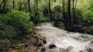Trabajan Sedema, iniciativa privada, pública  y comunitaria  para la recuperación de La Cañada en el río Magdalena